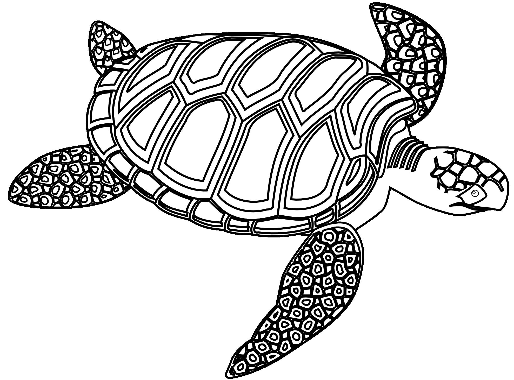 Drawn sea turtle black and white Clipart Panda Turtle Hawaiian Sea