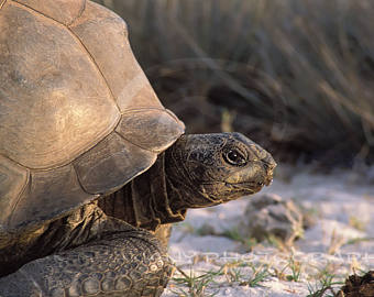 Turtle clipart nature #2
