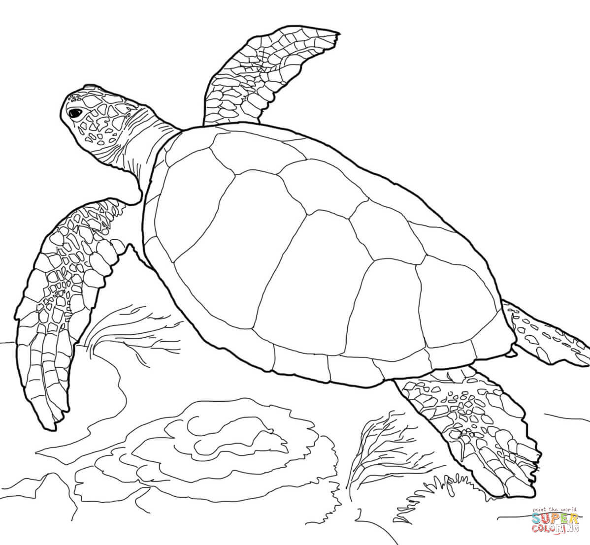 Drawn sea turtle loggerhead turtle Loggerhead  Sea Turtle Free