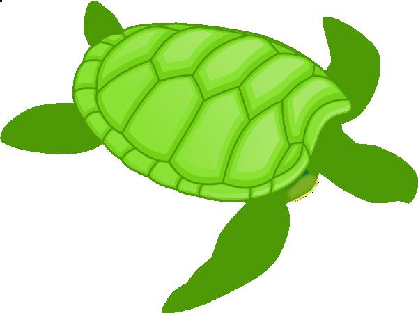 Turtle clipart small #7