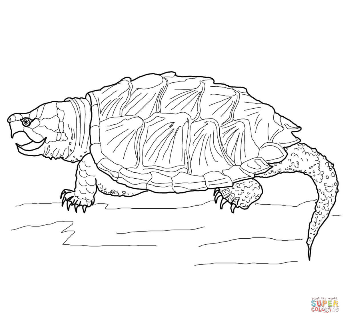 Drawn sea turtle snapping turtle Snapping Alligator coloring Free