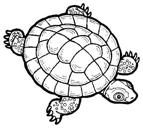 Sea Turtle clipart box turtle #12
