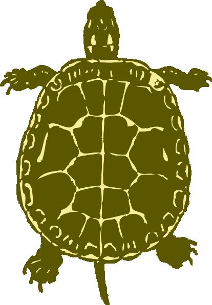 Sea Turtle clipart box turtle #10
