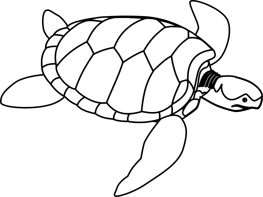 Turtle clipart vector #6