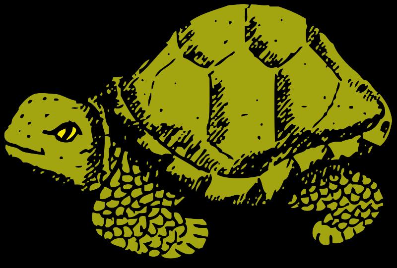 Turtle clipart walking #4