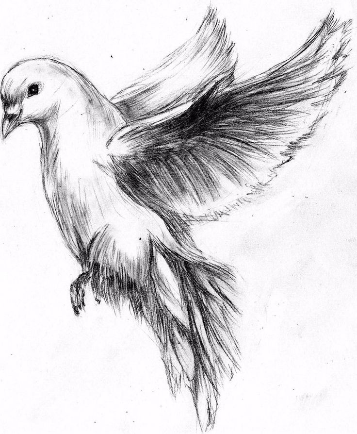 Turtle Dove clipart flight sketch #5