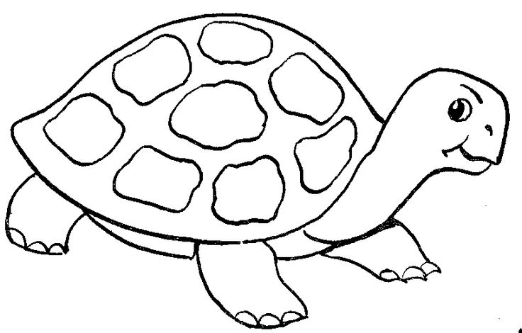 Tortoise clipart black and white #7