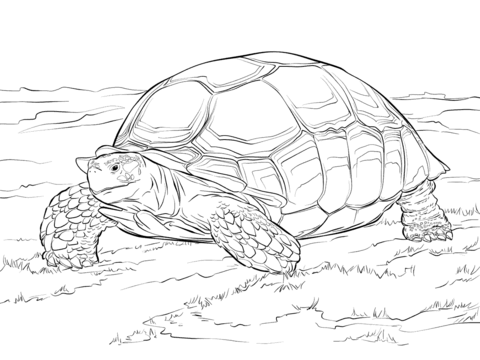 Tortoise clipart coloring page #11
