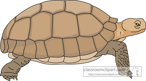 Turtoise clipart Of A Tortoise Clipart Canyon