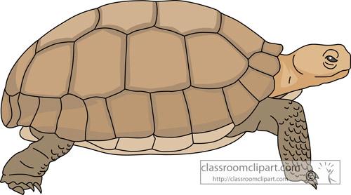 Turtoise clipart desert ecosystem #5