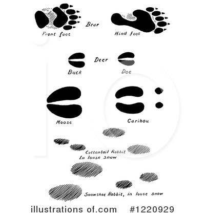 Turtoise clipart footprint #8