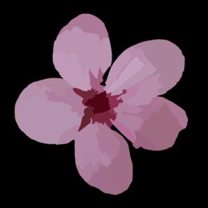 Ume Blossom clipart Plum clip  at Blossom