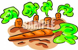 Carrot clipart underground Picture Carrot Ready of Clipart