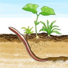 Underground clipart earthworm Science: life  cycle Ara