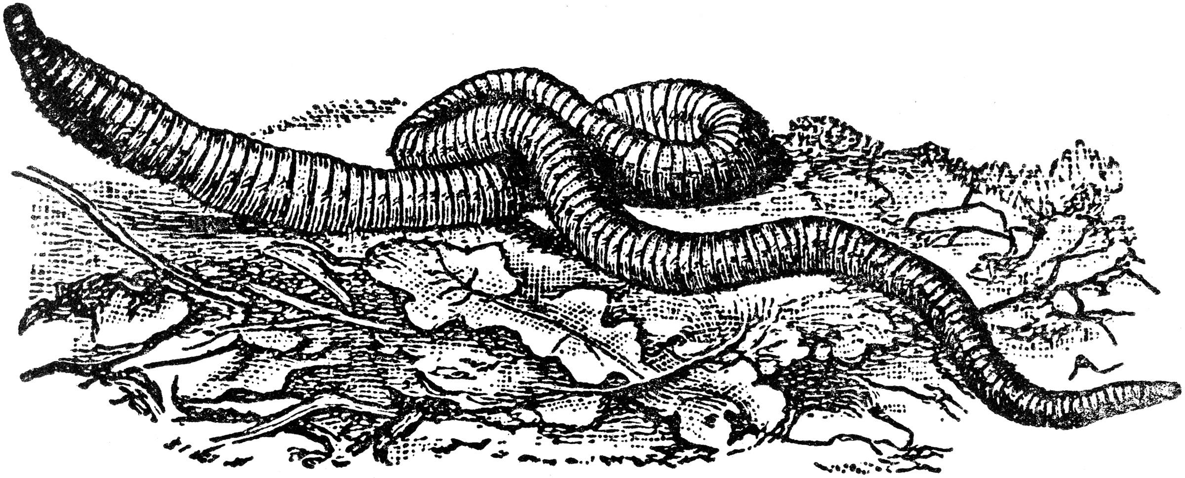 Worm clipart earthworm Earthworm Quantum Phenomena – The
