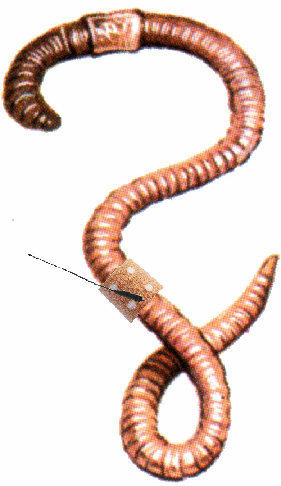 Underground clipart earthworm UrbanTick: Routines the and Soil