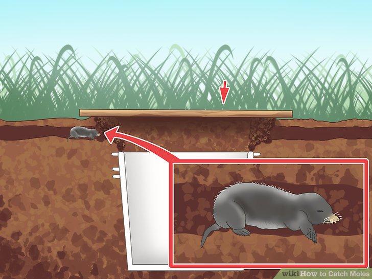 Underground clipart mole hole 4 Ways Catch Catch 3
