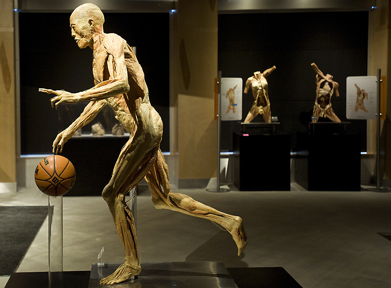 Universe clipart science museum Our biology Body The the