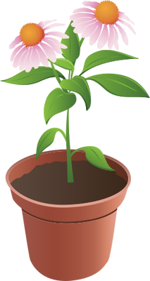 Drawn pot plant animated  flower and Flower flower