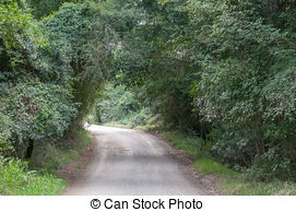 Valley clipart forest road Dense forest passes through the