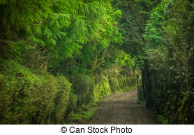 Valley clipart forest road Photography of Azores Stock valley