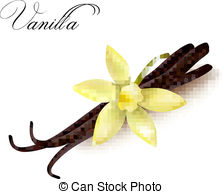 Vanilla clipart Flower clipart  888 Vector