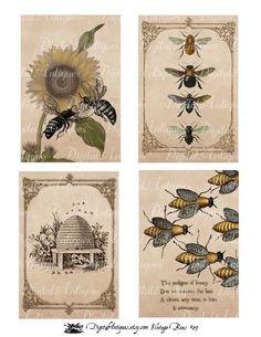Vanilla clipart apothecary On Pin more Art Vintage