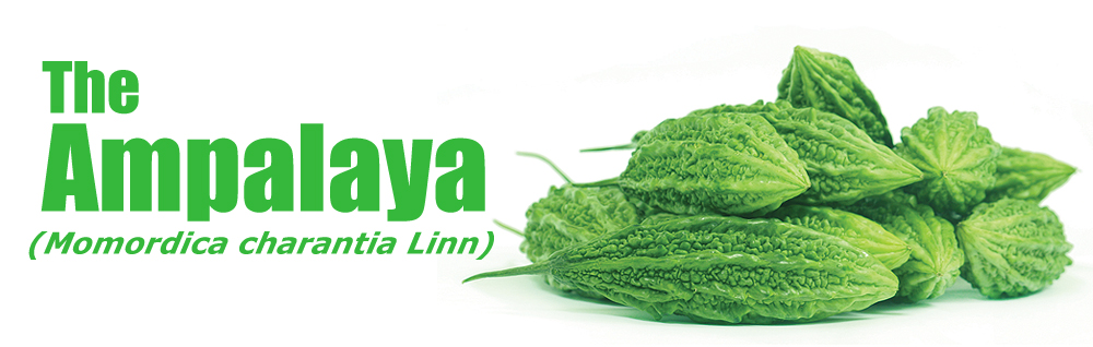 Vegetables clipart ampalaya Blood supplement FRUIT 100% lowering