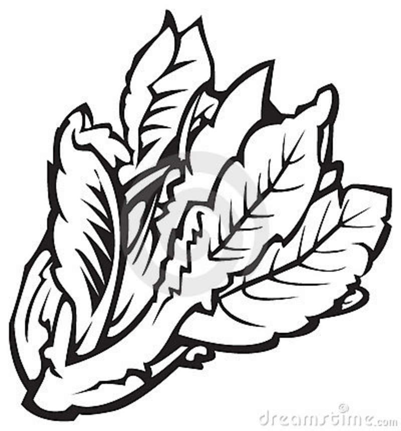 Cabbage clipart black and white Free Black White black%20and%20white%20vegetable%20clipart And