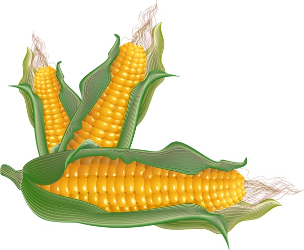 Vegetable clipart corn Art and Pinterest of Art