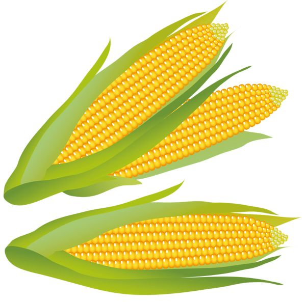 Vegetable clipart corn Pinterest on 1172 best CLIP