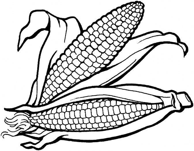Vegetable clipart corn 2 Cliparting thanksgivingrn Corn rn