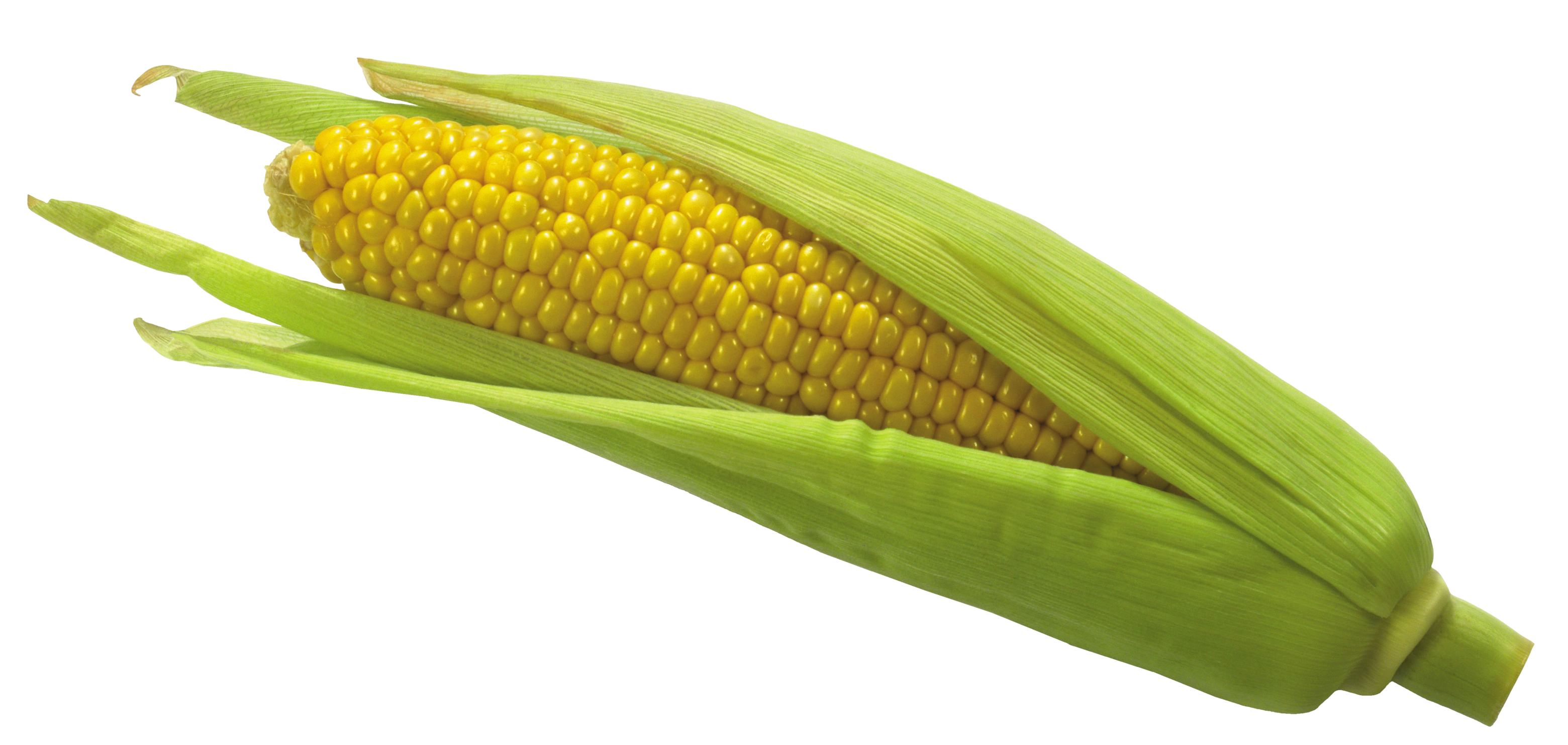 Vegetable clipart corn  Gallery Picture High Yopriceville