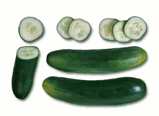 Vegetable clipart cucumber Domain Free clip vegetable Cucumber