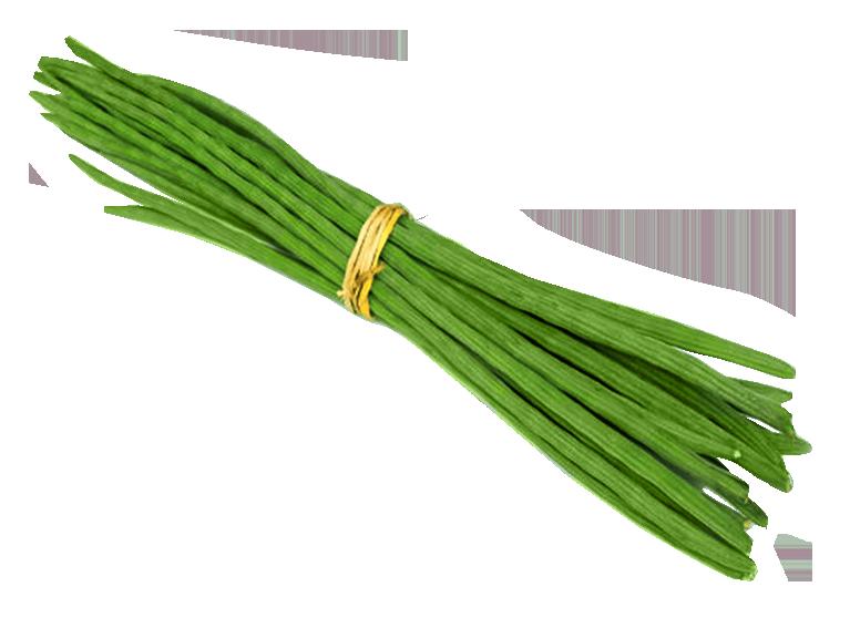 Vegetables clipart drumstick Image  Drumstick PNG PngPix