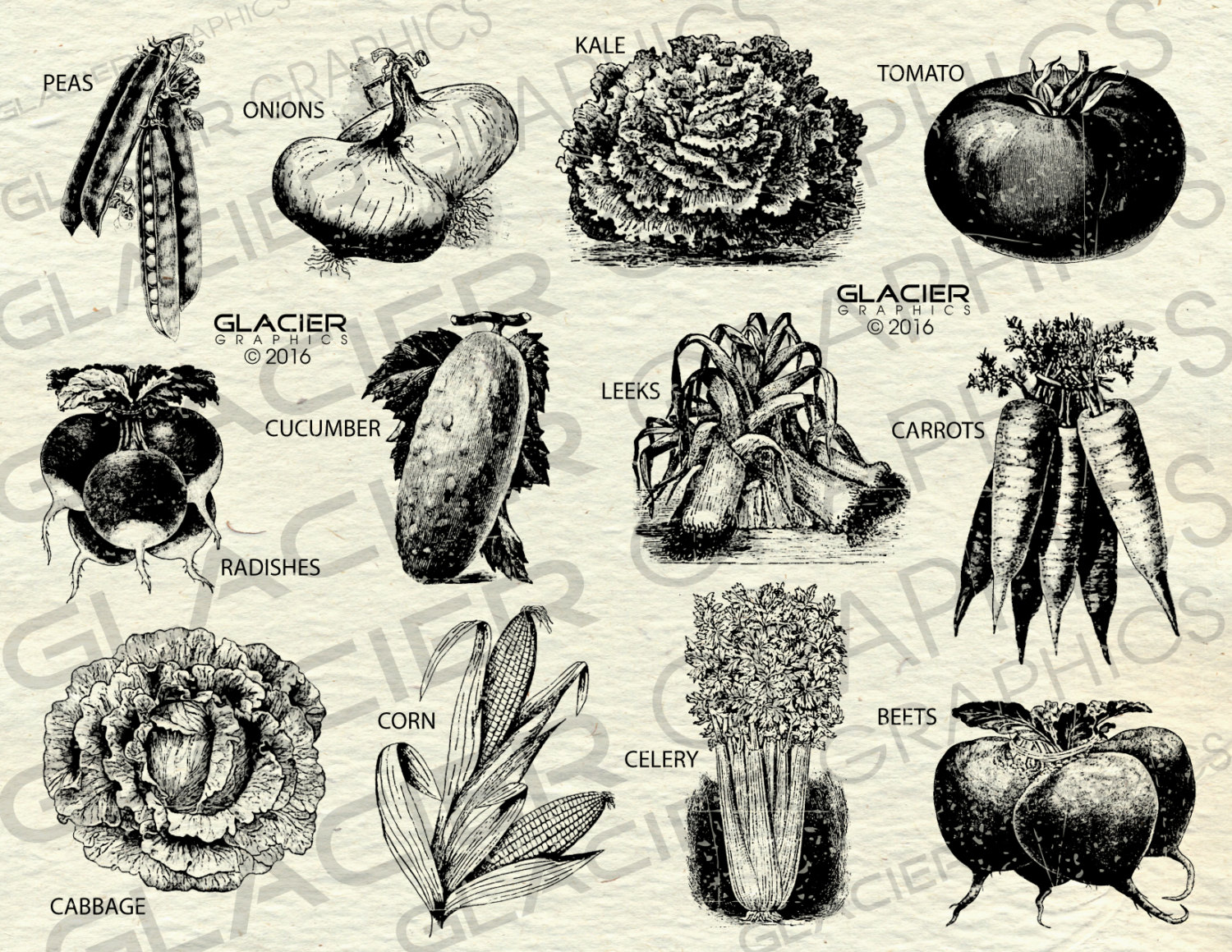 Vegetables clipart human Farm This digital Printable file
