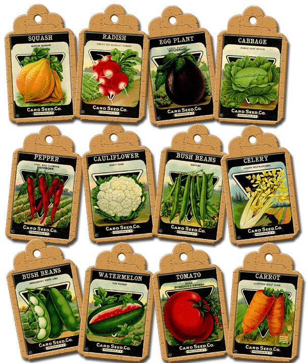 Seed clipart seed packet Digital INsTANT Hang/Gift VeGeTaBLe LoWER