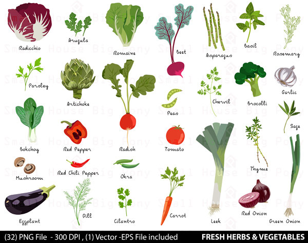 Grape clipart leafy vegetable Etsy Vegetable Herbs Clipart clipart