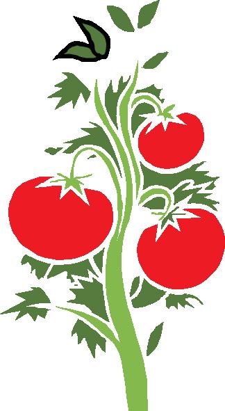 Cherry Tomato clipart tree vector Tomato art org clipart clipart