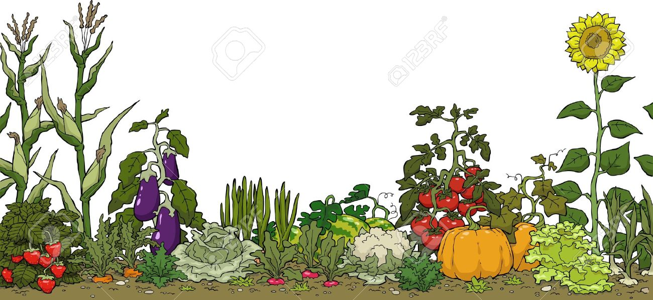 Background clipart vegetable garden #1