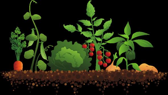 Soil clipart plant Free clipart Cliparts Crop