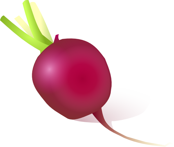 Radish clipart turnip Clip  Raddish at Clker