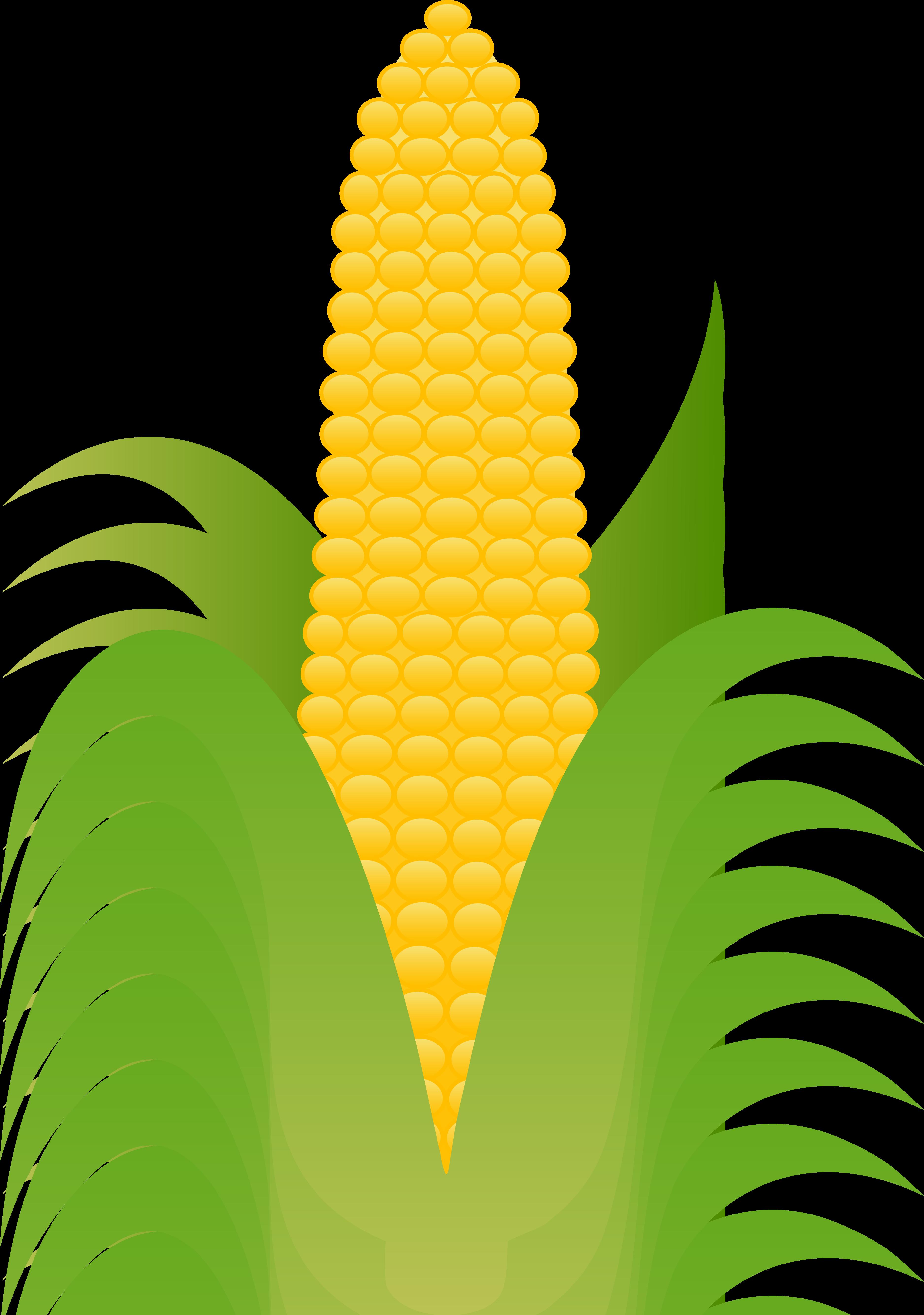 Drawn korn cob clip art Yellow Corn Yellow Ear Free
