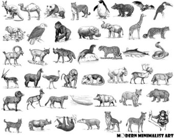 Wildlife clipart vintage animal Clipart Etsy Wild Animal Animals