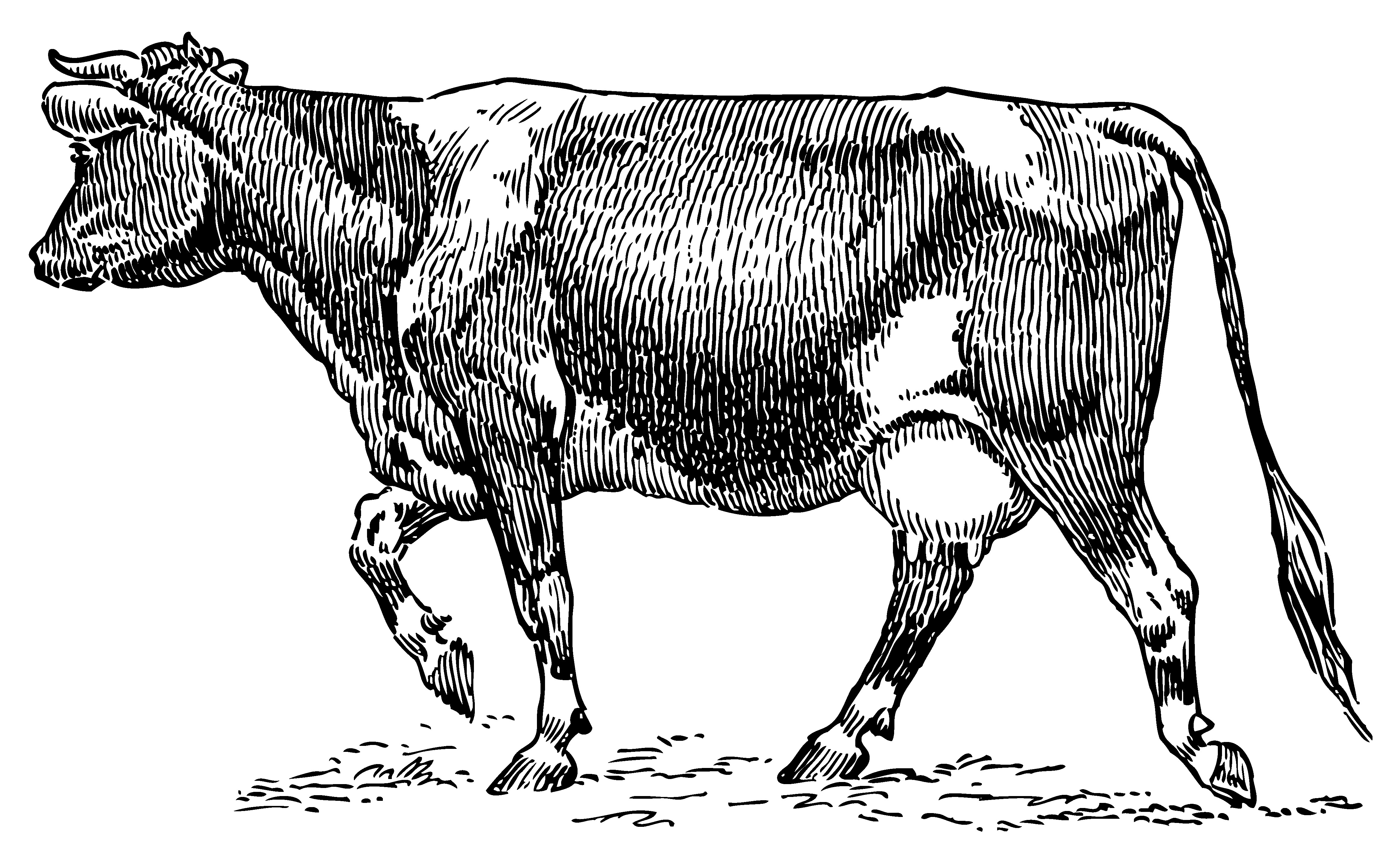 Beef clipart vintage Art Dairy Art Clip Clipart