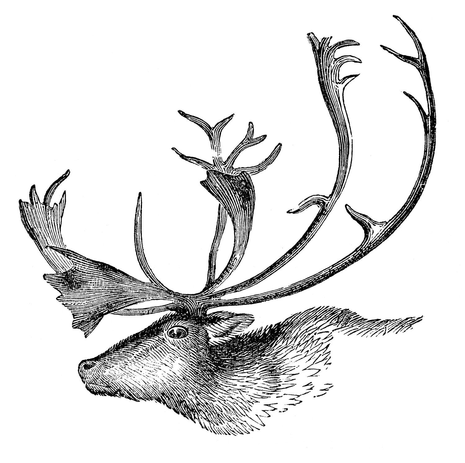 Caribou clipart animal Fairy Caribou Antlers Vintage Graphics