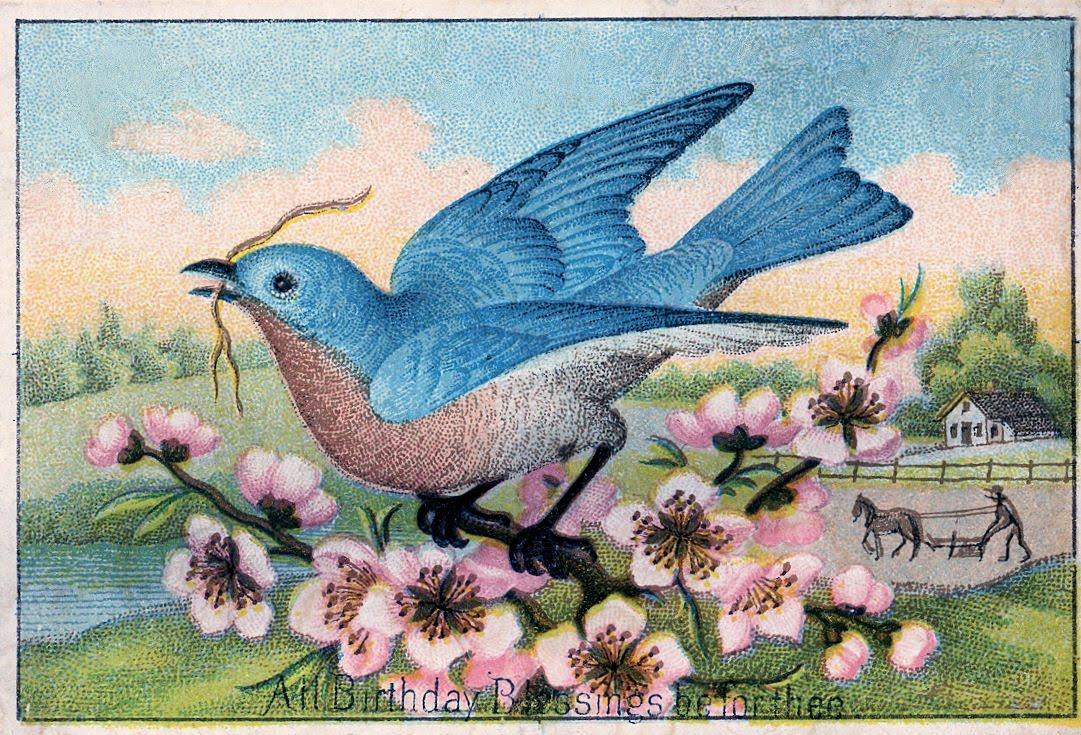 Bluebird clipart vintage Pretty Clip Free Vintage Art