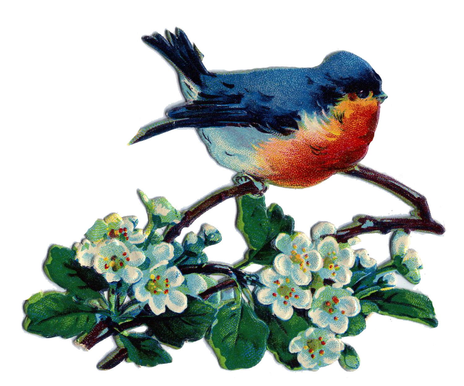 Bluebird clipart vintage With Lovely Vintage Image Blue
