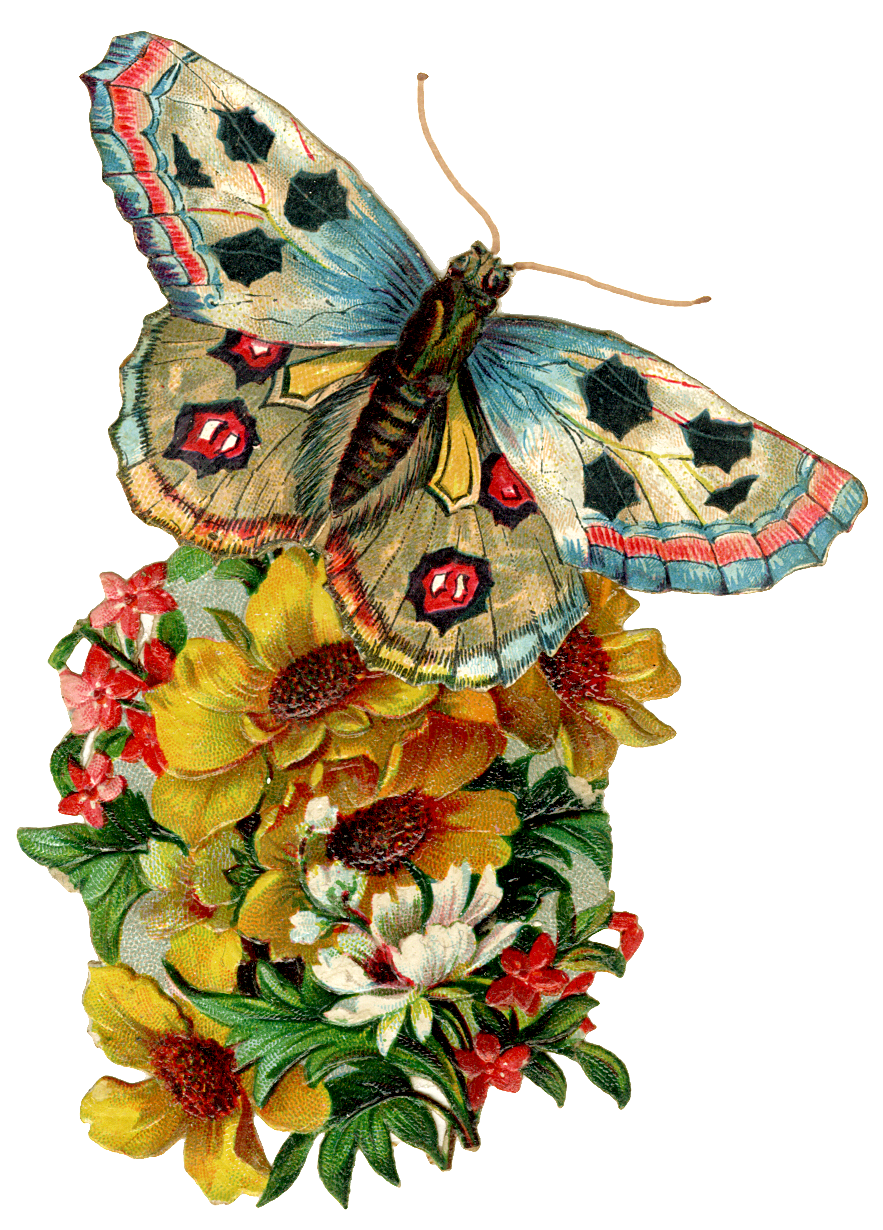 Moth clipart antique Day Vintage the butterfly Butterfly