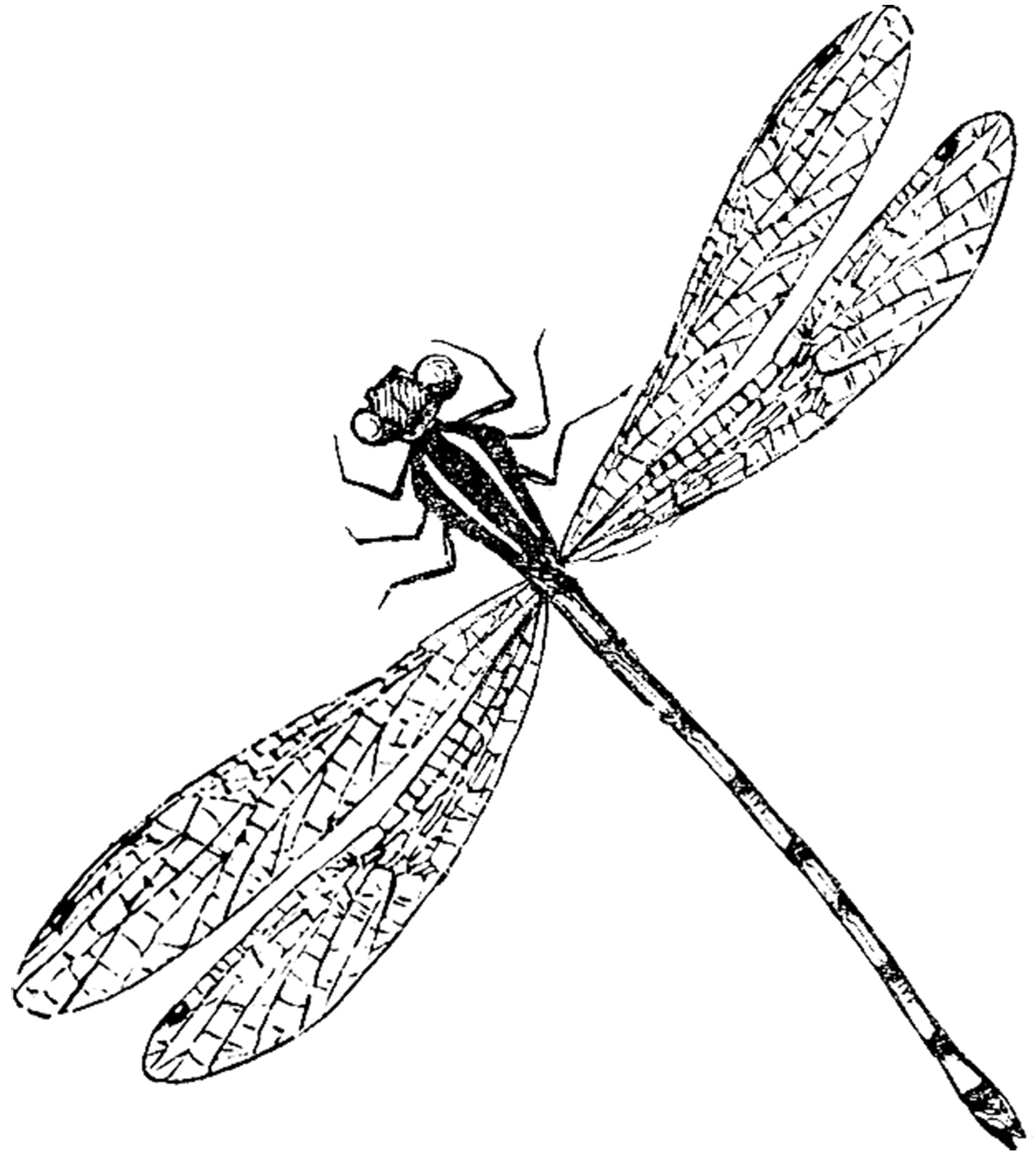 Realistic clipart dragonfly #5
